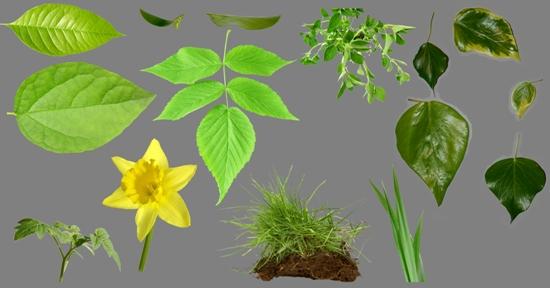 PSD исходник Листья, цветы, растения