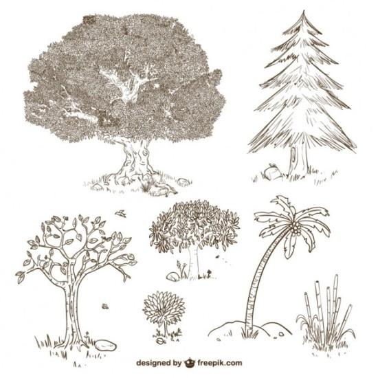 Рисунки деревьев в векторе.