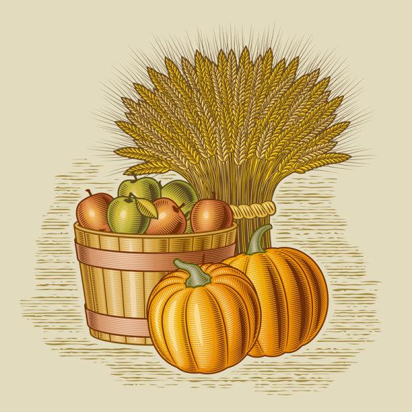 рисунок,ретро, урожай, сельское хозяйство, ферма, яблоки, тыква, пшеница,векторное изображение,EPS формат,JPG формат,AI формат,