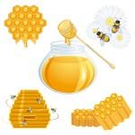 Вектор мед, пчелы, улей, банка,  соты