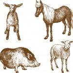 Вектор. Графика. Эскиз. Рисунки животных штрихами черно- белые.
