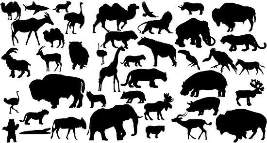 верблюды, бизоны, волки, козлы, гиены, олени, львы, бегемоты, носорог, газель, жираф, медведь, лошадь, мамонт, антилопа, акула, сова, страус, орел, черно- белый рисунок