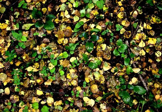 осень, листья, осенний фон, земля, лес