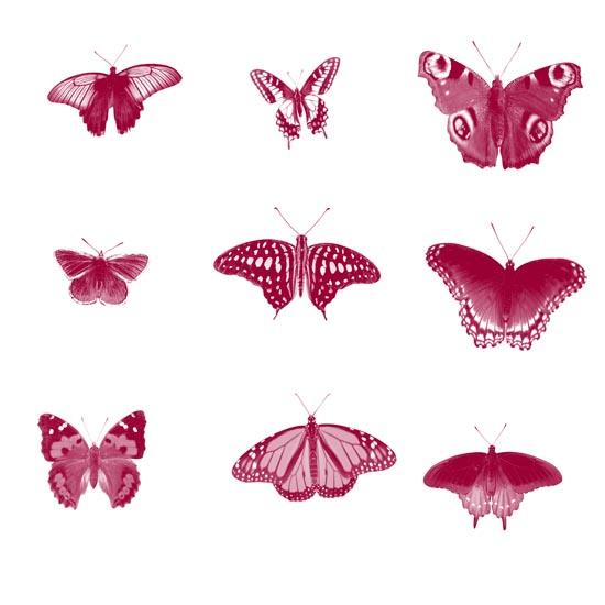 насекомые, бабочки, крылья, лето,кисти для фотошопа,