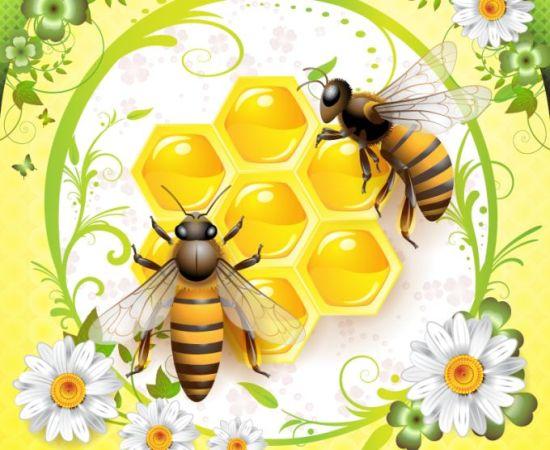 пчелы, мед, соты, рисунок, EPS, векторный, скачать, бесплатно