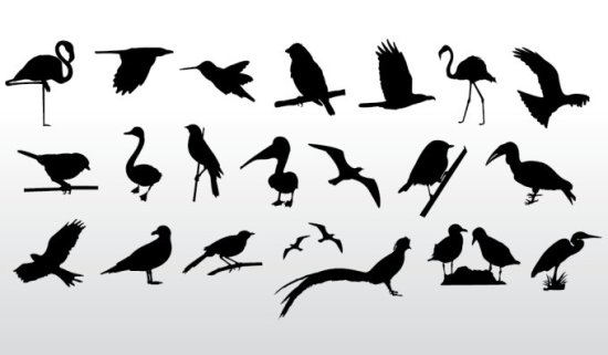 Птицы, цапли, гуси, колибри, орел. Силуэты, трафареты, векторные птицы.