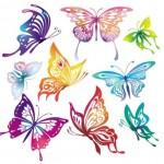 Векторные, цветные бабочки. Рисунок, контур, силуэт, клипарт.