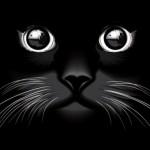 Черная кошка. Морда кошки. Векторная картинка.
