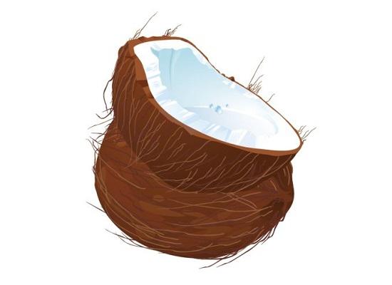кокос, плод кокосовой пальмы, мякоть кокоса, рисунок в векторе на белом фоне,  EPS