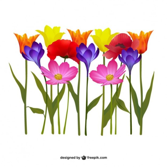 Полевые цветы в векторе.