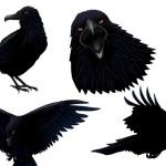 Вороны в векторе