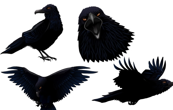ворон, ворона, клюв ворона, птицы, птица, в векторе, EPS