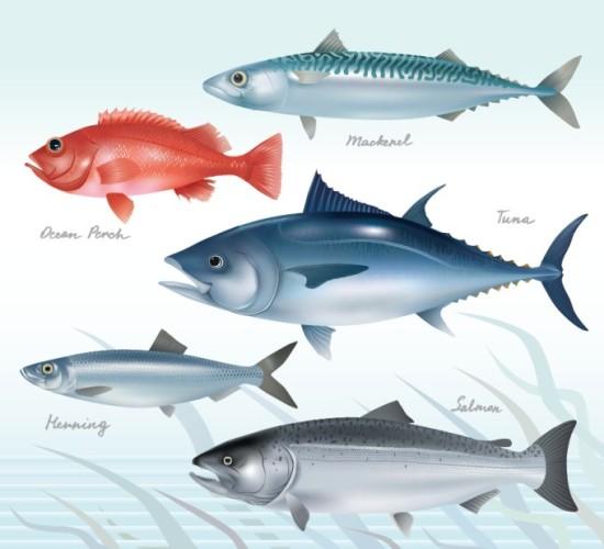 Рыбы: лосось, сельдь, тунец, морской окунь и скумбрия. Векторный рисунок.