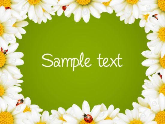 рамка, цветы, ромашки, текст, рамка из цветов, ромашек, векторная, EPS