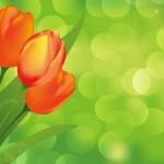Тюльпаны в векторе, 8 марта