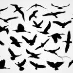Силуэты птиц, летящие птицы в векторе.