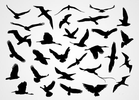 птица, птицы, силуэты птиц, орел, ласточка, голубь, чайка, аист, в векторе, AI