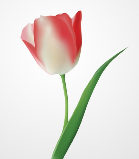 Векторный рисунок тюльпана. Открытка с 8 марта, днем рожденья.