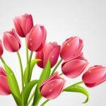 Поздравительная открытка с 8 марта, днем рожденья в векторе. Тюльпаны.