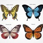 Рисунок красивых бабочек в векторе