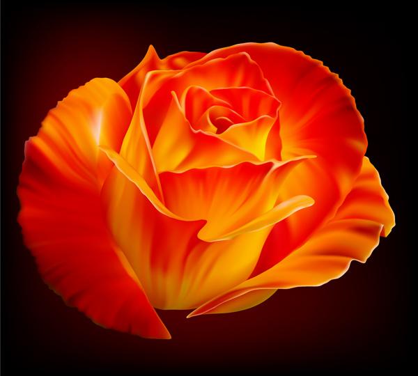 Картинка розы и векторное изображение розы.