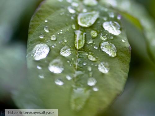 природа, роса, листок, вода, текстура, фон, фотошоп