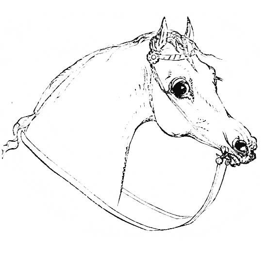 голова лошади, контурный рисунок, черно белый