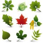 Зеленые, красные листья деревьев в векторе и картинка высокого разрешения.