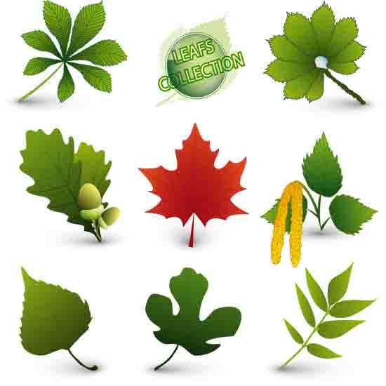 листья, кленовые листья, желуди, дубовые листья, каштановые листья, осенние листья, EPS формат, JPG формат, высокое разрешение