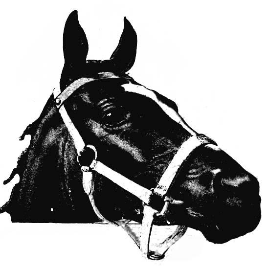 голова коня, упряжка, черно белый рисунок