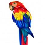 Красочный попугай в векторе.