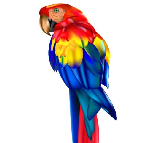 попугай, птицы,  в векторе