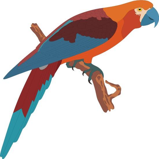 Векторный рисунок попугая.