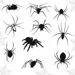 Пауки, насекомые, паутина. Кисть для фотошопа и картинка высокого разрешения.