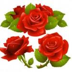 Векторные красные розы. Рисунок.