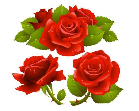 векторные розы, цветы, eps