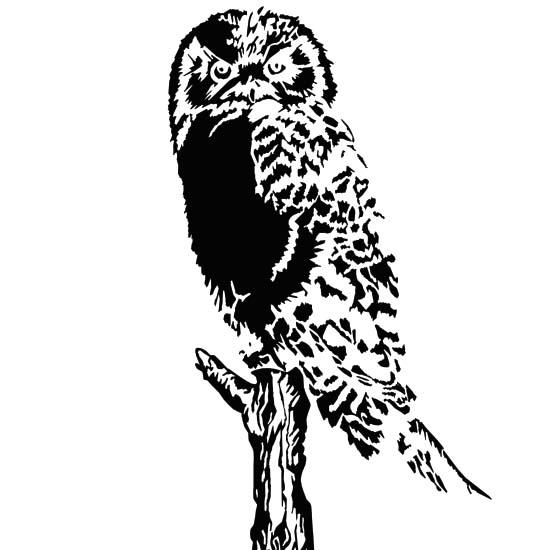 Черно белый рисунок филина, совы, силуэт