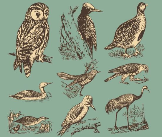 Рисунок совы, утки, цапли, дятла. Векторные птицы.