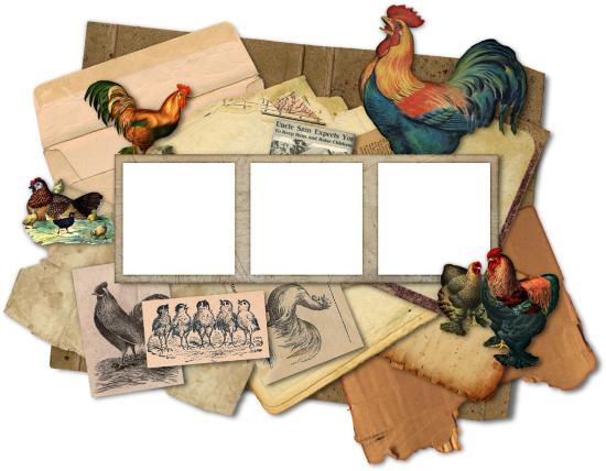 Рамка курицы и петухи с прозрачным фоном.