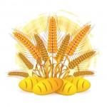 Колосья пшеницы, хлеб, сельское хозяйство в векторе