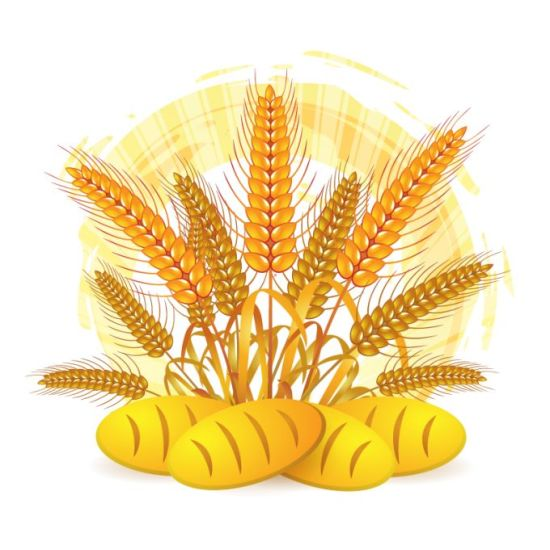 хлеб, колосья, пшеница, сельское хозяйство, в векторе, EPS